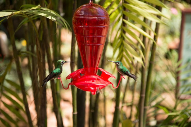2 Hummingbirds at a Feeder