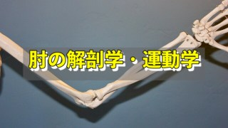 肘の解剖学