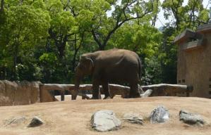 天王寺動物園の象さん