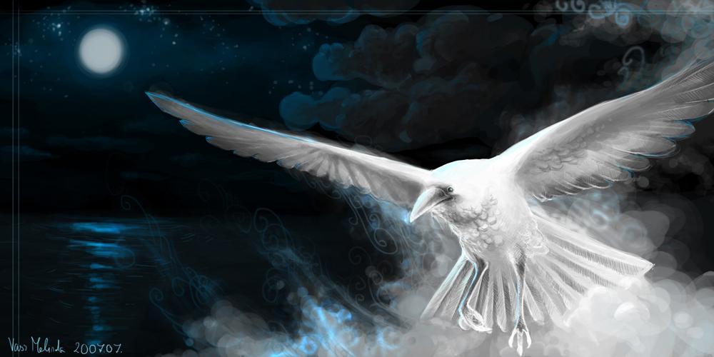 white_raven.jpg