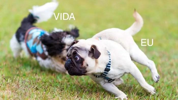 Significados De Expressoes E Termos Populares Que Envolvem Cachorros