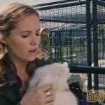 Download Puppy Swap: Love Unleashed (2019) Mp4