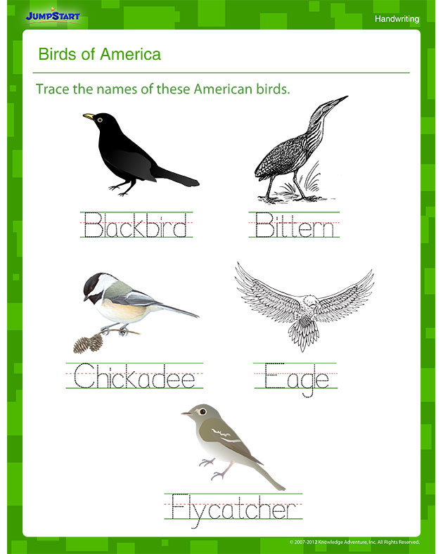 Birds of America – Printable Writing Worksheet for Kids