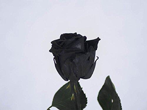 Verdissimo Rosa preservata in astuccio regalo dimensioni testa mini, altezza 30 cm, nero