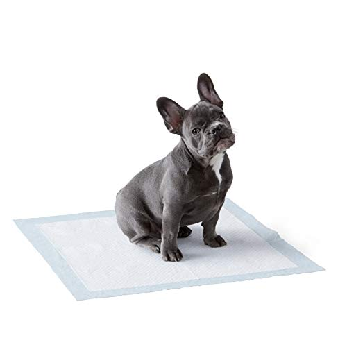 Amazon Basics Dog and Puppy Pads, Leak-proof 5-Layer Pee Pads with Quick-dry Surface for Potty Training, Regular (22 x 22 Inches) - Pack of 100