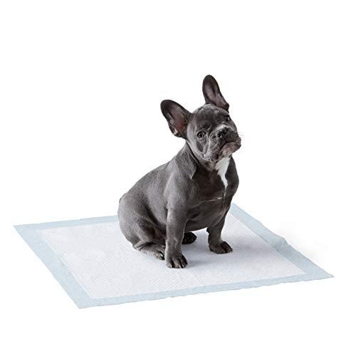 Amazon Basics - Tappetini igienici assorbenti per animali domestici, misura standard, 100 pz