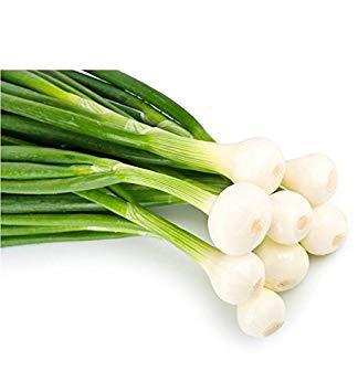 SANHOC Semi Pacchetto: Barletta (Pearl) + Non-GMO Cipolla Seed - Barletta Rosso Burdy Walla Walla Spagnolo