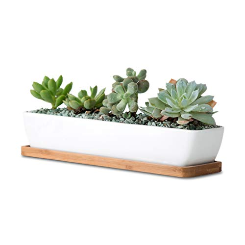 Rectangle White Ceramic Succulent Planter