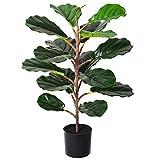 YQing 70cm Artificial Ficus Lyrata rbol Bonsai, Elastica Ficus rbol Benjamina bonsai ficus Artificial Decoracion para la Decoracin de la oficina en casa