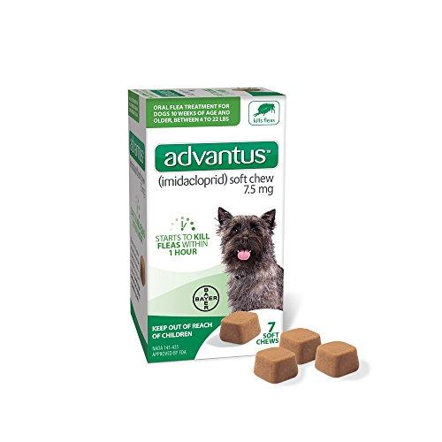 Advantus (Imidacloprid) 7-Count Flea Chews for...