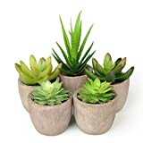 Abree Lot de 5 plantes succulentes artificielles en pot gris et cactus artificiels...