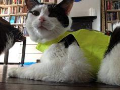 Mynwood-Cat-JacketHarness-High-Viz-Kitten-up-to-8month-Escape-Proof