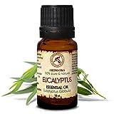 Huile Essentielle Eucalyptus 10ml - Eucalyptus Globulus - Huile Essentielle 100% Pure et Naturelle - pour le Sauna - Aromathérapie - Détente - Diffuseur