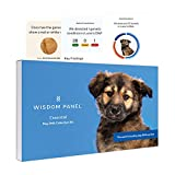 Wisdom Panel Essential, New and Improved Dog DNA Test for Ancestry, Traits and Medical Complications