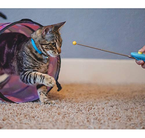CAT SCHOOL Cat Training Kit. Training Tools – Fun and Interactive Training Games to Play with Your Cat. Teach Your Cat to Fist Bump!