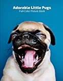 Adorable Little Pugs Full-Color Picture Book: Dog Picture Book for Children, Seniors and Alzheimer's Patients