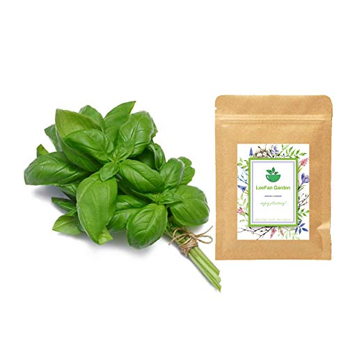 LeeFan Garden, 500+ Sweet Basil Seeds for Indoor/Garden Planting, Non-GMO Organic Heirloom Herb Seeds