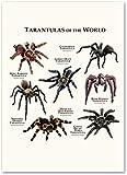 Peinture sur toile araignée encyclopédie animale affiches d'art et photo murale pour la...