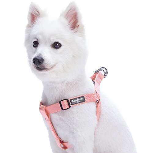 Blueberry Pet Essentials 19 Colors Step-in Classic Dog Harness, Chest Girth 16.5' - 21.5', Blazing Yellow, Small, Adjustable Harnesses for Dogs
