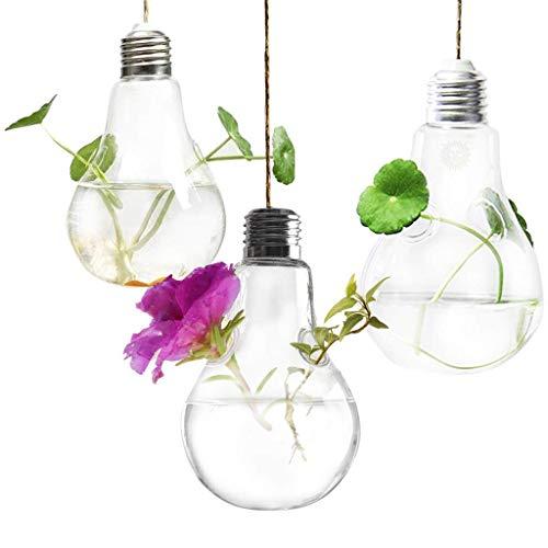 SunGrow Hanging Light Bulb Terrarium
