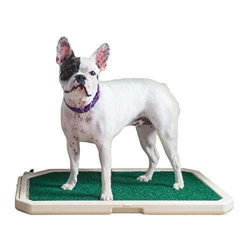PetSafe Piddle Place Indoor/Outdoor Dog Potty,...