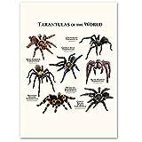 Araignée Animal encyclopédie Art toile peinture nordique affiches et impressions photos...