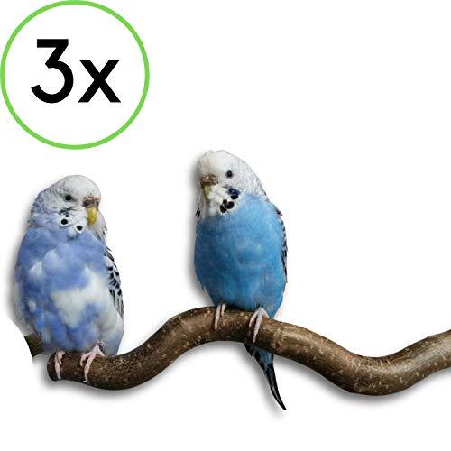 3 gebogene Naturholz Sitzstangen von der Korkenzieherhasel Wellensittich & Co.  Naturholzstangen für den Vogel als wichtiges Vogelzubehör