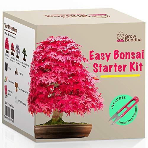 Kit Haga crecer su propio Bonsái - Cultiva fácilmente 4 tipos de árboles Bonsái con...