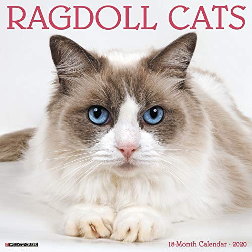 Ragdoll Cats 2020 Wall Calendar