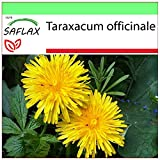 SAFLAX - Diente de len - 200 semillas - Taraxacum officinale