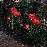 Solar Rose Lights...image