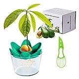 FORMIZON Plantas de Aguacate, Cortador de Aguacate Cultivo de Aguacate, Kits de cultivo en casa,...