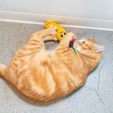 Pet-Craft-Supply-Funny-Enticing-Pouncing-Cuddling-Chasing-Catnip-Interactive-Boredom-Relief-Plush-Cat-Toys