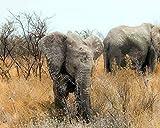 DIY Pintura Al óLeo por NúMeros Kits Tema Pintura Al óLeo Digital Kits De Lona CumpleañOs Boda O DecoracióN NavideñA Decoraciones Elefantes Naturaleza Africa
