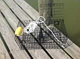 Maryland Blue Crab Pot Trap Chesapeake...