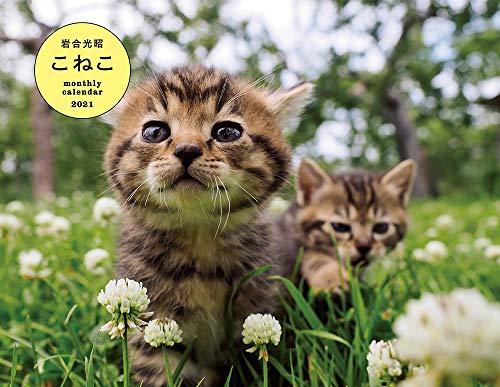 岩合光昭 こねこ monthly calendar 2021 (カレンダー)