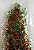 Planta Egeria Sp. 47cm / Planta Acutica Acuario Artificiales Planta