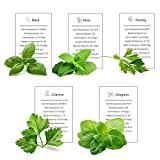 Environet Herb Garden Seeds Collection - 5 Culinary Herb Seeds Pack - Basil, Mint, Parsley, Cilantro and Oregano Seeds, Non-GMO Heirloom Seeds for Planting