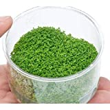(水草)組織培養 キューバパールグラス(無農薬)(1カップ) 北海道航空便要保温