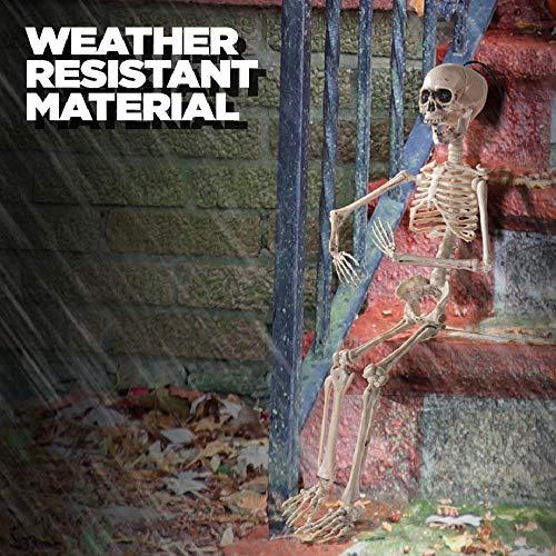 Prextex.com Esqueleto Que Puede Hacer Poses para Halloween 60 cm (20 Pulgadas) - Esqueleto de Cuerpo Completo con articulaciones movibles para Hacer Poses para la Mejor decoración de Halloween