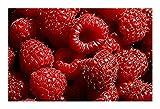 Framboise rouge - 10 graines
