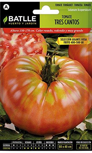 Semillas Hortícolas - Tomate Tres Cantos Gigante rosa - Bat
