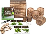 Indoor Herb Garden Starter Kit - Heirloom, Non-GMO Herb Seeds - Basil Thyme Parsley Cilantro Seed, Potting Soil, Pots, Scissors - DIY Grow Kits for Growing Herbs Indoors, Kitchen, Balcony, Window Sill