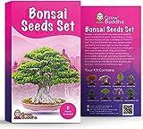 Set de semillas de rbol de bonsi para regalo de - Cultiva tu propio rbol de bonsi fcilmente con nuestro set de 8 semillas de rbol de bonsi