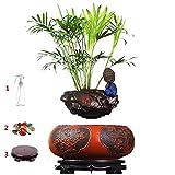 Maceta de bonsi flotante - Macetas de flores de aire de levitacin con suspensin magntica - Bonsai de levitacin de diseo creativo - Decoraciones de oficina en el hogar - Regalo divertido, Bonsai