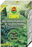 COMPO Antiamarronamiento de conferas de larga duracin, Para todo tipo de conferas y plantas de hoja perenne, 6 meses de duracin, 1 kg