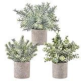 Krelymics Lot de 3 mini plantes artificielles d'eucalyptus avec pots pour la maison,...