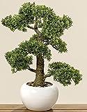 Home Collection - Muebles, decoracin, Plantas Artificiales - Boj Comn Bonsai Artificial en macetero - Material: plstico - Color: Natural - Dim. Altura Aprox. 48 cm