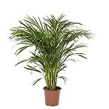 FloraAtHome - Plante verte -...