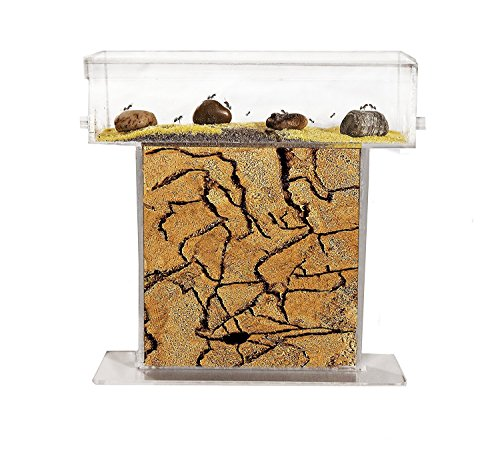 AntHouse - Hormiguero Natural de Arena - Kit T Acrílico 15x15x1,5 cm...